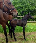 Filly ex TB mare