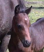 Filly out of Cringle Funfare 9 days old