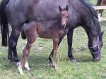Filly 9 days old