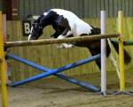 Tarnbrook Take It All   CHAPS Graded Event Stallion