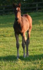 filly 4 weeks old