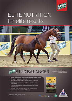 Thursden Vallye Raphael Features in Baileys Horse Feeds advertising