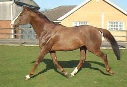 Yoshka Stallion at stud